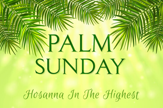 Palm Sunday - greeting banner template for Christian holiday, with palm tree leaves background. Congratulations with first day in Holy Week and symbol of triumphal entry into Jerusalem