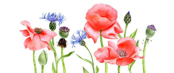 Obraz watercolor drawing red poppy flowers - fototapety do salonu