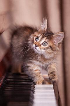 Kitten on a piano keyboard close up