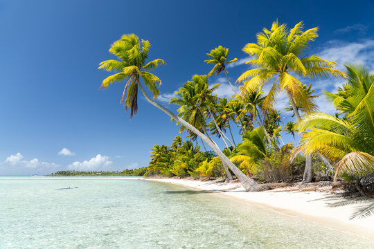 Tropical beach with palm trees, South Sea, French Polynesia