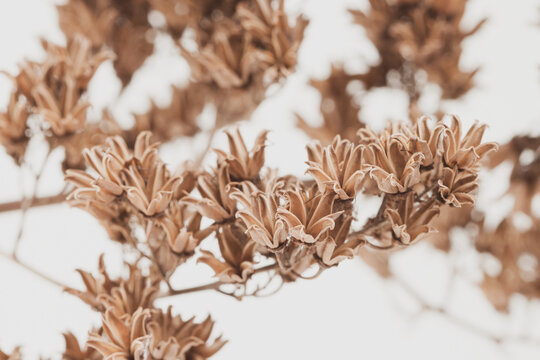 Brown vintage romantic bell shape dry flowers branch with blur background macro