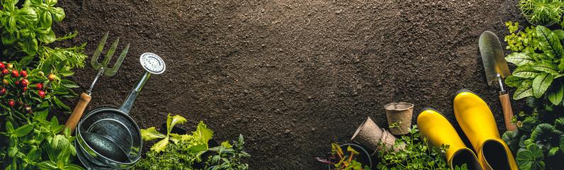 Fototapeta Gardening tools and seedlings on soil obraz