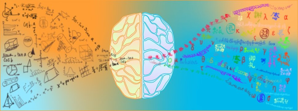 abstract background of brain function of two side language art and math
