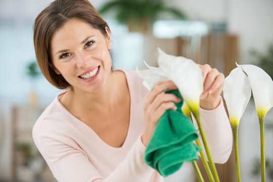 woman cleaning dust from houseplant