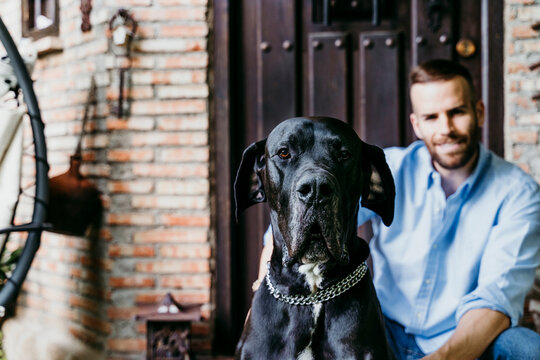 Young man sitting on terrace with Great Dane dog