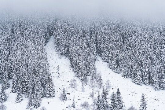 Spain, Cataluna, Baqueira, Snow covered pine trees on hill