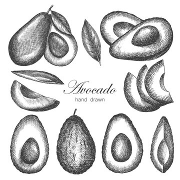 avocado set. vector illustration. hand-drawn. sketch in old style. isolated.