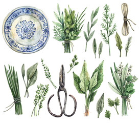 Fototapeta Large watercolor set of illustrations - gardening, kitchen herbs, provence. Parsley, dill, sage, oregano, thyme, mint, basil, bunches of herbs, rope, vintage scissors, ceramic plate - isolated on whit obraz