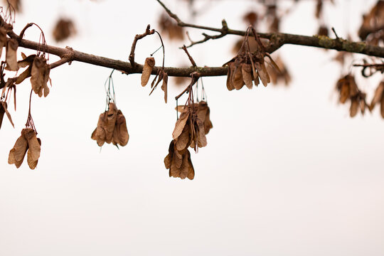 dried leaves on a tree