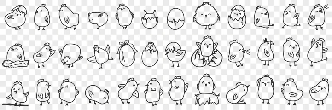 Small chicks on farm doodle set. Collection of hand drawn cute funny positive chicks eating hatching out of egg shell living in farmlands for children books isolated on transparent background