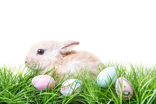 Young beige easter bunny in green fresh meadow and easter eggs.