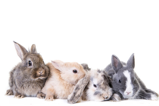 4 young, cute bunny children photographed in front of isolated studio background.