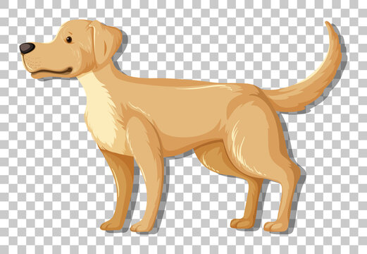 Yellow Labrador Retriever in standing position cartoon character isolated on transparent background