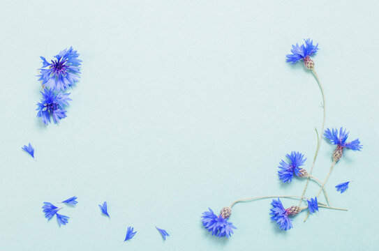 blue cornflowers on green paper background