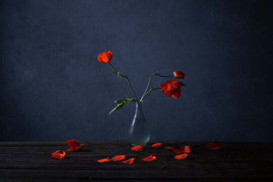 red poppies in vase on wooden table on dark blue background