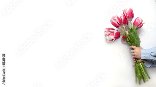 Banner hand with a bouquet of pink tulips on a white background. Spring Woman and Mother's Day Concept. Easter and spring greeting card and by March 8.