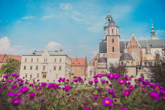 Royal Archcathedral Basilica of Saint Stanislaus and Wenceslaus on the Wawel Hill also known the Wawel Cathedral in Krakow Royal Castle on sunny autumn day. Beautiful magenta flowers in the foreground
