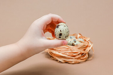Natural colored quail eggs in the hands of a child, copy space. Easter theme. Place for text