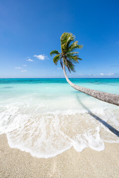 Beautiful tropical beach with coconut tree