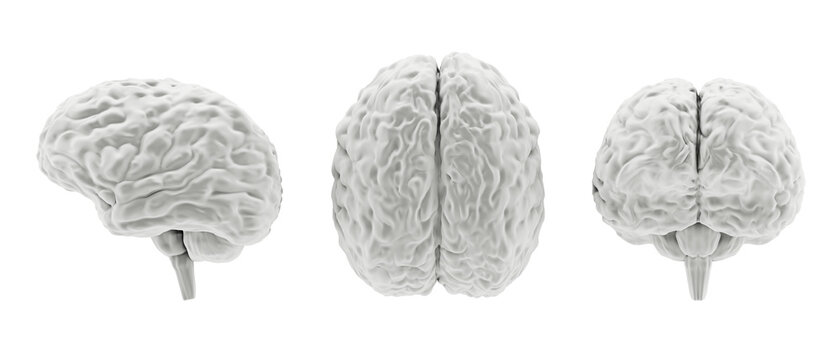 Grayscale human brain model from different sides isolated on white, 3d illustration