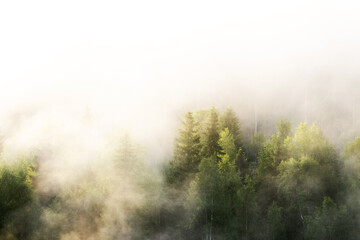 Lush and green trees in a morning mist in Oulanka National Park, Northern Finland.