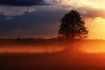 Drzewo w mgle oświetlone promieniami zachodzącego słońca.