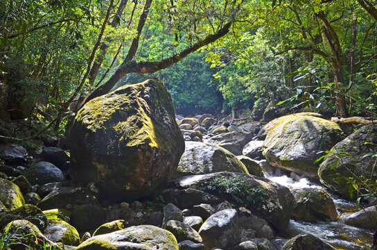 Moss grows on boulders and the sun casts shadows as a stream flows through the Daintree Rain Forest in Northern Queensland, Australia.