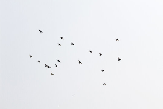 Beautiful view of a flock of birds flying in the sky