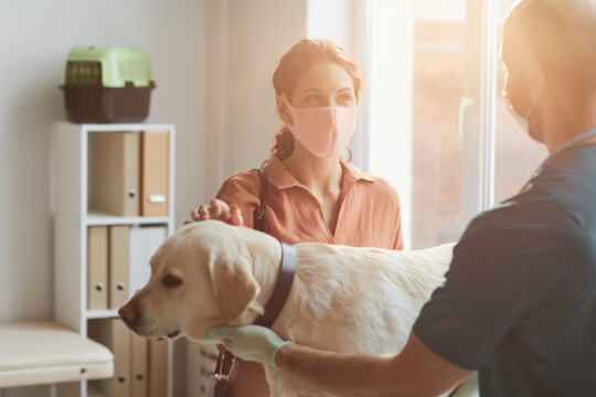 Waist up portrait of young woman wearing mask while talking to veterinarian examining dog at vet clinic, scene lit by sunlight, copy space