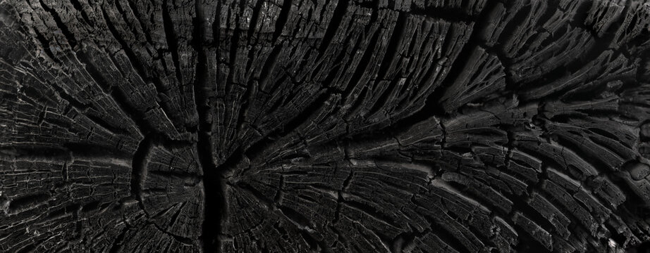 Dark black background of a burnt tree, soot, and ash. Burn texture. Aftermath of a forest fire.