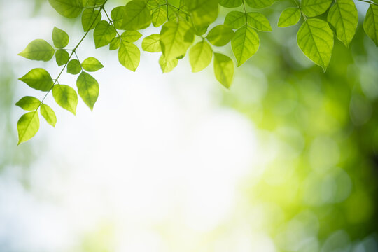 Nature of green leaf in garden using as background natural leaves wallpaper