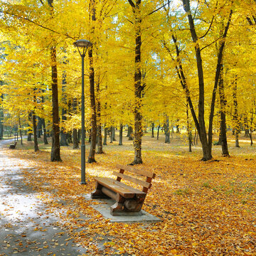 beautiful autumn park with bench for relaxation.