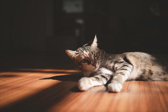 Tabby cat lying on floor looking toward camera