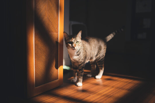 Tabby cat walking in shadow on floor at house looking to camera