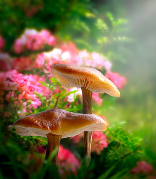 Fantasy magical Mushrooms glade in enchanted fairy tale dreamy elf Forest, fabulous fairytale blooming pink rose flower garden on mysterious background, elven magic woods shine in bright sunny morning