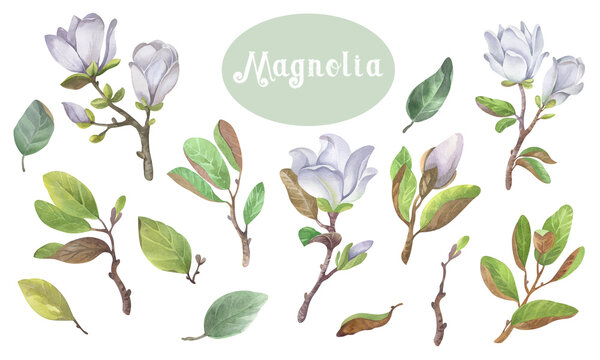 Collection of watercolor seamless patterns blooming magnolia and birds