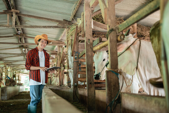 a smiling farmer wearing casual clothes stands up while using a digital tablet in the background of the cattle farm