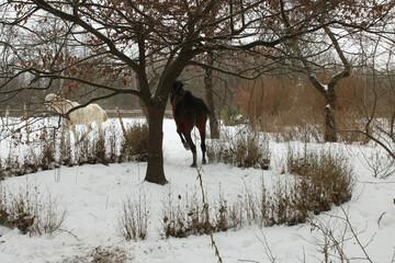 ogród zimowy z koniami