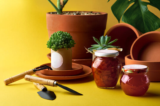 Plant for decoration in a pot. clay pots in assortment for gardening on a yellow background