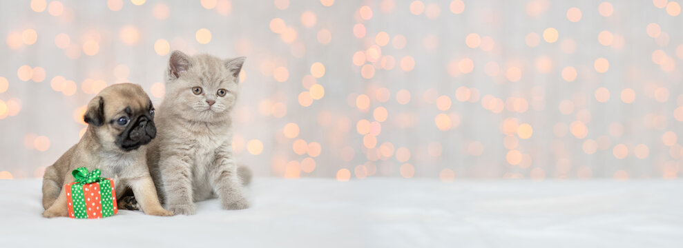 Pug puppy and baby kitten sit together on festive background with gift box and look away on empty space