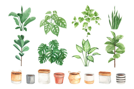 DIY watercolor indoor plant and pots perfect for card, sticker, wall decor and other print design