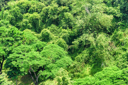 Top view of tropical forest. Green foliage of rainforest.