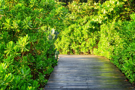 Scenic wooden path among bright green foliage of trees in park