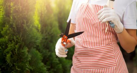 Banner secateurs cutting autumn pruning conifer shrubs garden shears