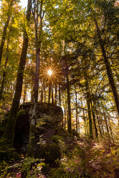 Autumn forest in Berchtesgadener Land, Bavaria, Germany.