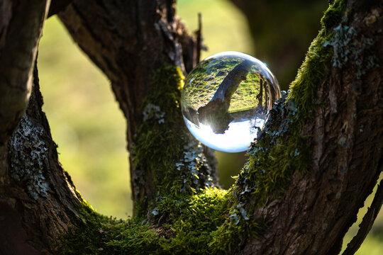 im alten Weidenbaum liegt eine Glaskugel und spiegelt den Frühlingsanfang in der Natur.