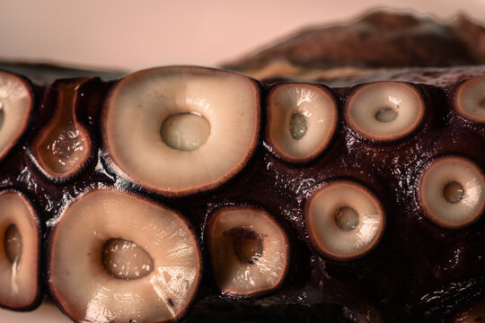 Close-up of suckers on octopus legs.