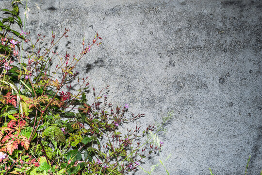 Flowers on the background of the wall. Natural background.