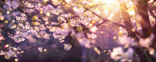 Beautiful Nature Scene with Blooming Tree and Sun Flare. Springtime