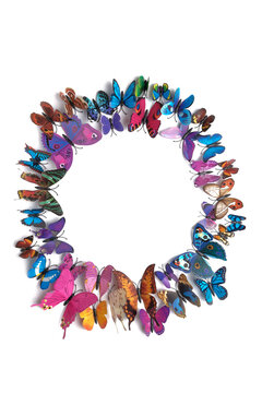 a flock of colorful butterflies isolated on a white background in the shape of a circle, copy space